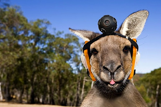 Kangaroo with head camera Easter eggs: i migliori pesci daprile del 2012 di Google