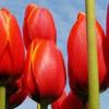 red2 Collezione di foto sulle tonalità del Rosso